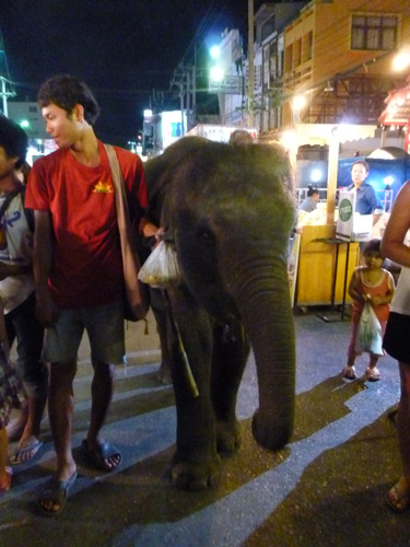 elephant in night market